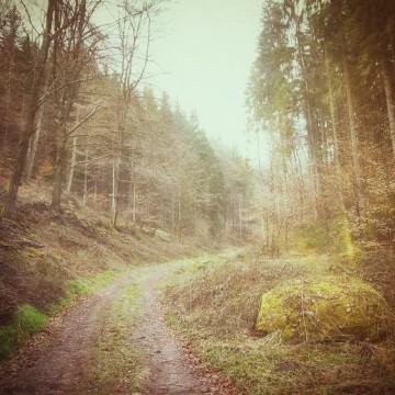 Forest.(c)prinzette